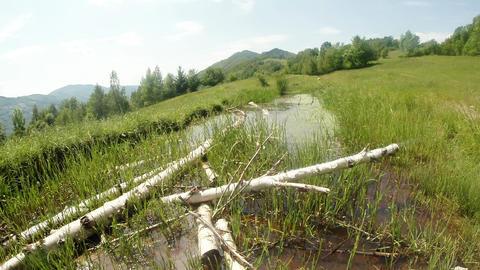 019. Dragonfly Pond 0