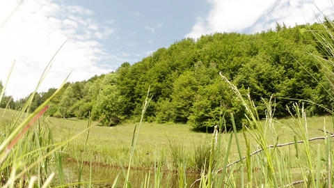 green grass, forest green, green pond in the mount Footage