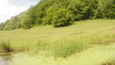 panorama of mountain bright green swamp Footage