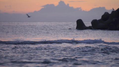 Sunset Sea And Birds,in Tsuruoka,Yamagata,Japan stock footage