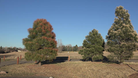 Local Government Poisoning Trees Footage