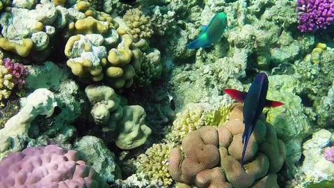 Marine Life With Fish And Corals In Red Sea Footage