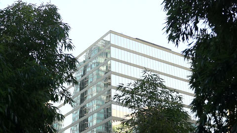 Office Building & Bamboo Shrubs - 01 stock footage