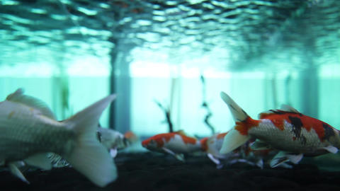 fish Footage