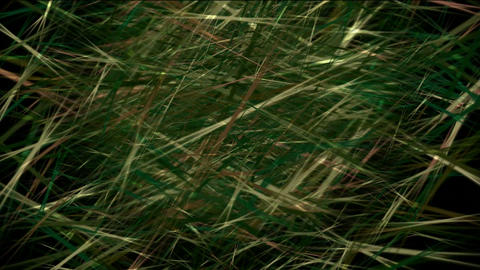 Animation of grass,wheat,seedlings,plants,farm,vegetables,wetlands,marshes,Phragmites australis,flow Animation