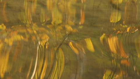 Autumn Abstract Water Stock Video Footage