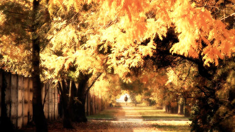 Autumn Scene Industrial Area 04 falling leaves and pedestrian stylized Footage