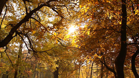 Beautiful Autumn Scene 04 falling leaves Stock Video Footage