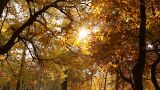 Beautiful Autumn Scene 04 falling leaves Footage