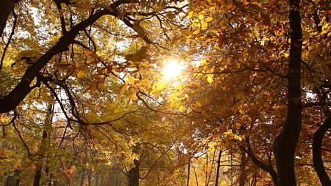 Beautiful Autumn Scene 04 falling leaves Stock Video Footage