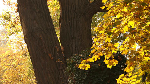 Beautiful Autumn Scene 07 falling leaves Footage