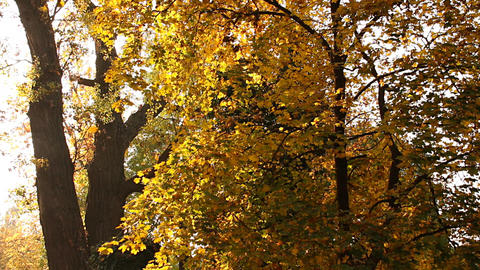 Beautiful Autumn Scene 09 falling leaves Stock Video Footage