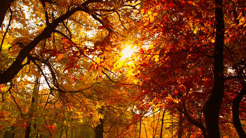 Beautiful Autumn Scene 15 falling leaves stylized Stock Video Footage