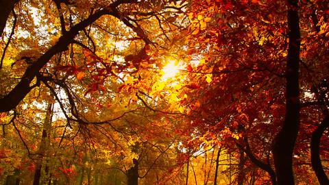 Beautiful Autumn Scene 15 falling leaves stylized Footage