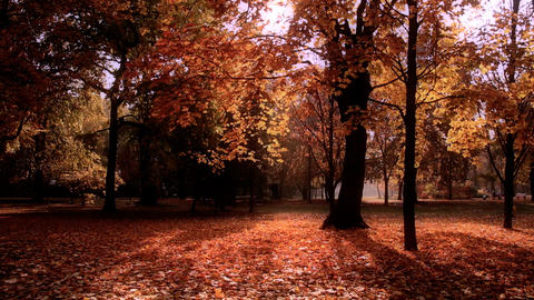 Beautiful Autumn Scene 17 stylized Footage