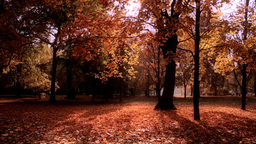 Beautiful Autumn Scene 17 stylized Stock Video Footage