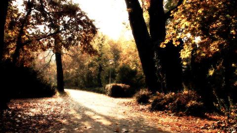 Beautiful Autumn Scene 19 falling leaves stylized Stock Video Footage