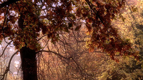 Beautiful Autumn Scene 21 falling leaves stylized Stock Video Footage