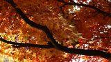 Beautiful Autumn Tree 04 light reflections Footage