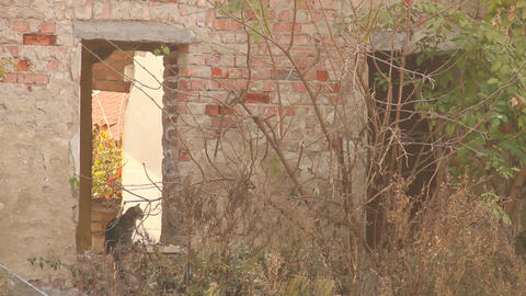 Cat in the Window of an Abandoned House Stock Video Footage