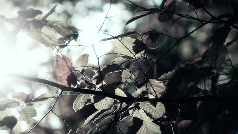 Elm Autumn Leaves 06 close up stylized thriller Stock Video Footage