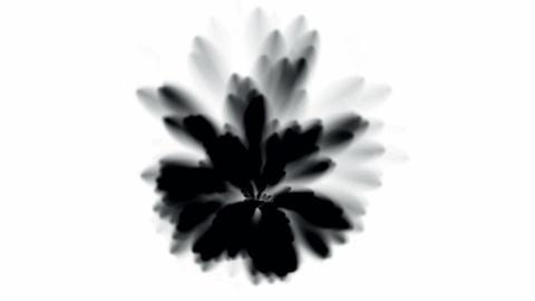 black smoke,splash ink.watercolor,smoke,dissolve,pollution Stock Video Footage