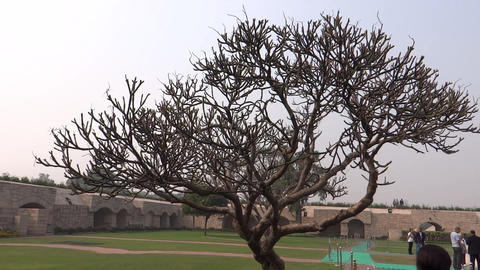 Leafless Tree At Rajghat stock footage