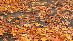 Autumn leaves on the ground Footage