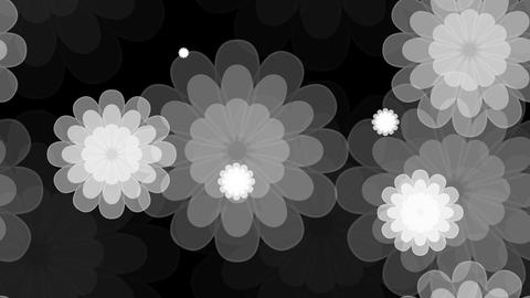 tileable grayscale flower shape with alpha Animation