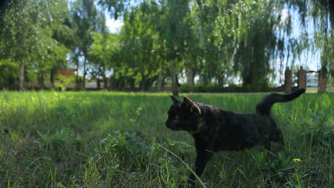 Funny Black Cat Walks In The Park stock footage