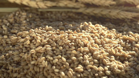 Ears Of Wheat , Grain And Flour HD stock footage