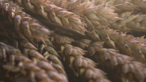 Production Of Flour stock footage
