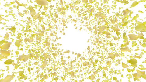 Rose petals yellow front B Cw 4 K Animation