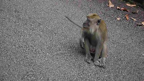monkey 1 Stock Video Footage