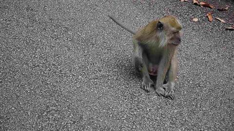 monkey 1 Footage