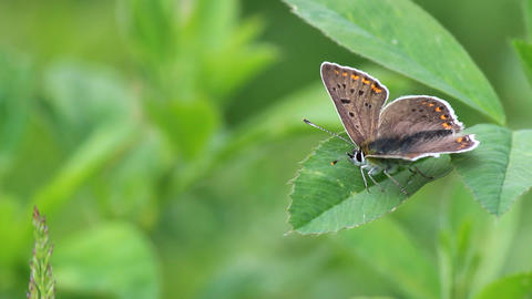 Butterfly Footage