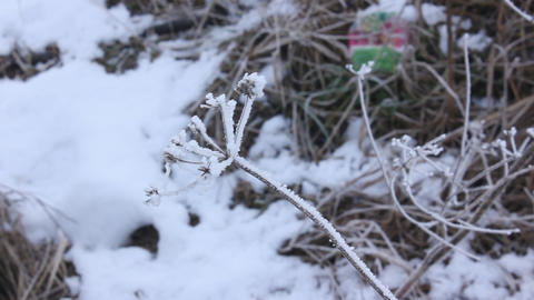 winter snowly plants Footage