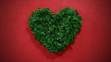 Flower Heart Logo【HD】記念日向けタイト After Effects Project
