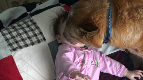 Dog Kissing Baby Excessively - Overhead Live Action