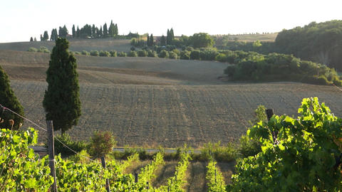 Views Of A Tuscan Vineyard (2 Of 11) stock footage
