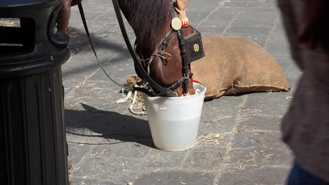 Work Horse Drinking In Piazza stock footage