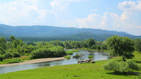 landscape with river between mountains and horses Footage