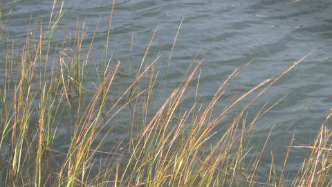 sea grass waves water Footage