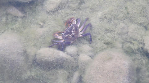 Freshwater Crab Hid On Bottom Of Reservoir stock footage