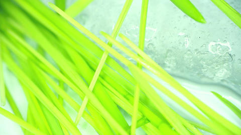 stalks of green grass on background of spring ice macro Footage
