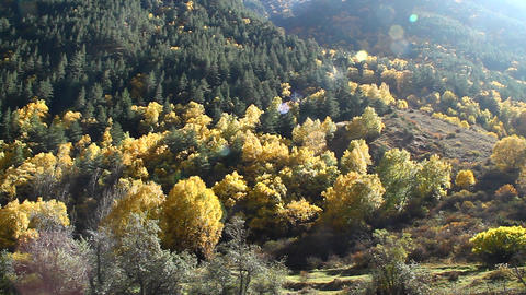 Beautiful autumn landscape with golden trees and the mountains, shooting against Footage