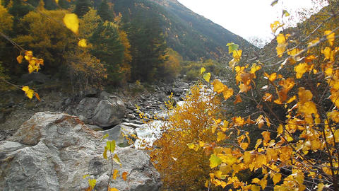 Beautiful autumn landscape with golden trees, mountain and river Footage
