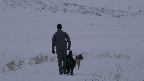 Man Walk 2 Dogs In Winter stock footage