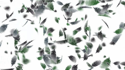 bird feathers falling.feathers... Stock Video Footage