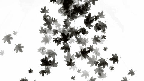 a group of black leafs falling.pattern,symbol,dream,vision,idea,creativity,vj,beautiful,art,decorati Animation